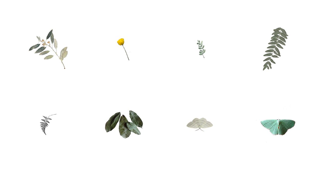 sarajune_elements